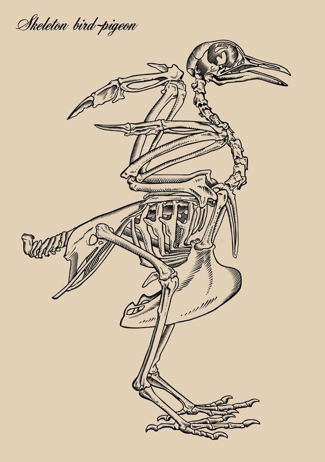 Pájaro-paloma De Los Esqueletos Ilustración del Vector - Ilustración ...