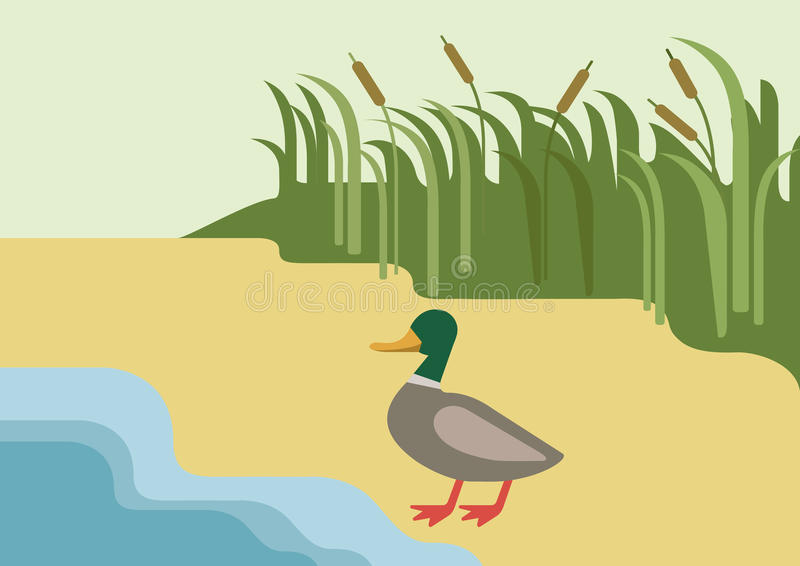 Pájaro plano del animal salvaje de la granja del vector de la historieta del río del pato de Drake libre illustration