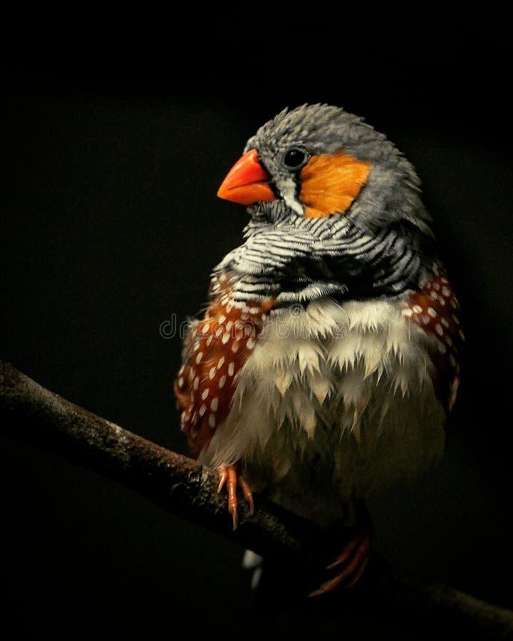 pájaro por completo del color imagenes de archivo