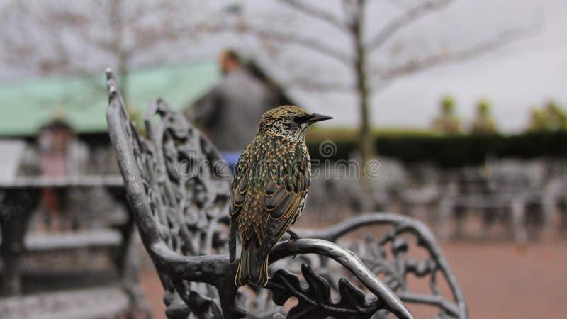 Pájaro que mira la cámara foto de archivo libre de regalías