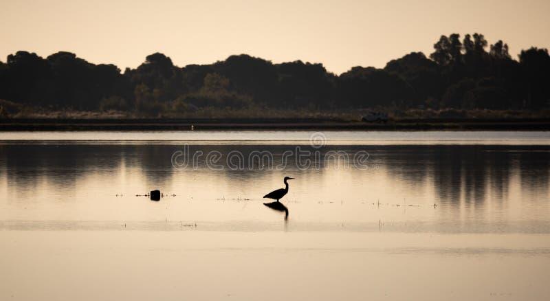 Pájaro que mira a la derecha, alto contraste fotos de archivo libres de regalías