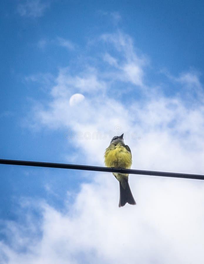 Pájaro que no mira la luna stock photo