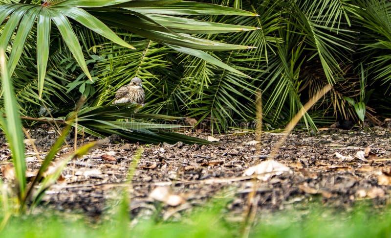 Pájaro que oculta en la vegetación y la calma fotos de archivo