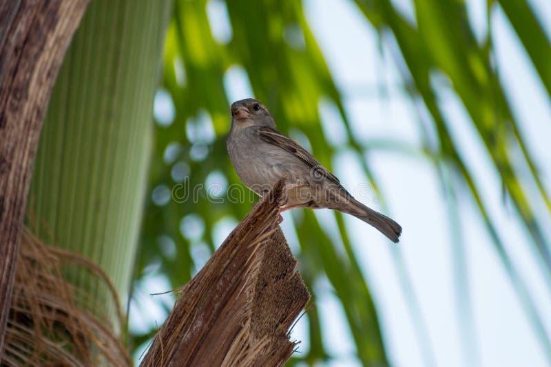 Pájaro que presenta en una palma imagen de archivo libre de regalías