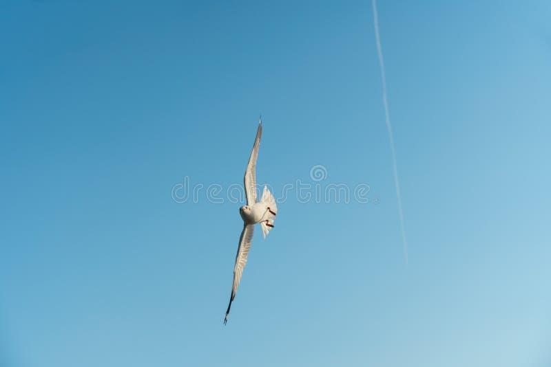 Pájaro que se desliza en el cielo claro foto de archivo libre de regalías