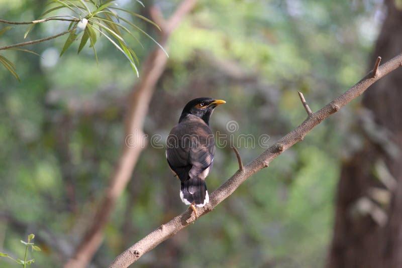 Pájaro que se sienta en el tronco de un árbol fotografía de archivo libre de regalías