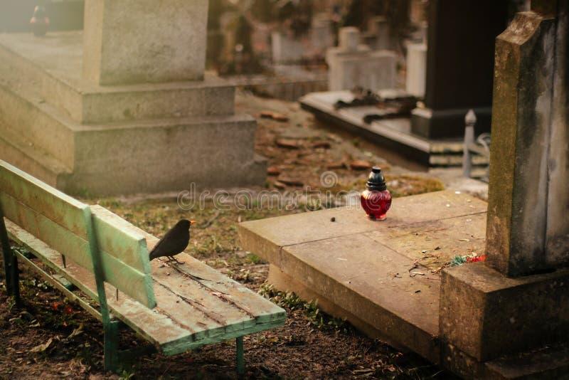 Pájaro que se sienta en la tumba de piedra vieja en sepulcro en cementerio antiguo fotos de archivo libres de regalías