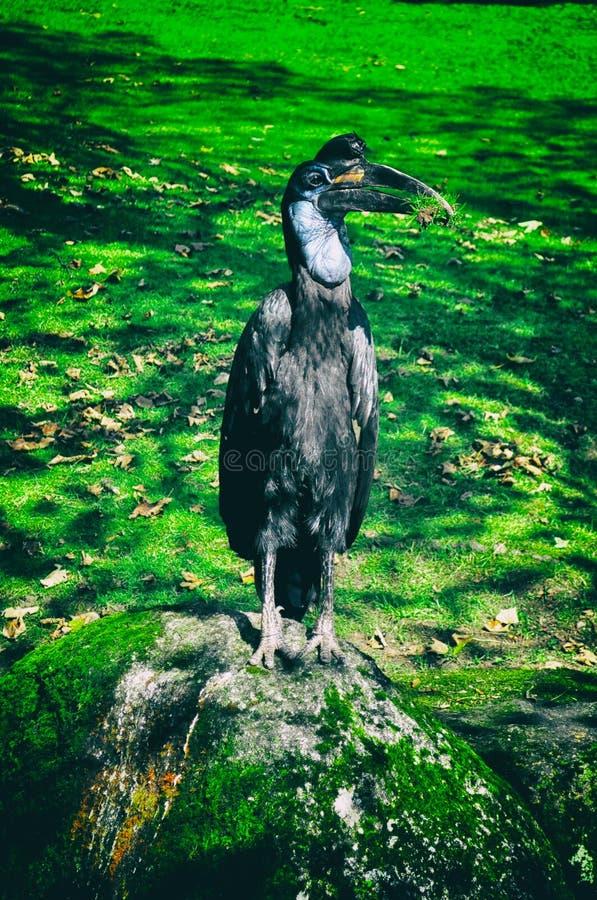 Pájaro que se sienta en rama de árbol en bosque o selva tropical fotos de archivo libres de regalías
