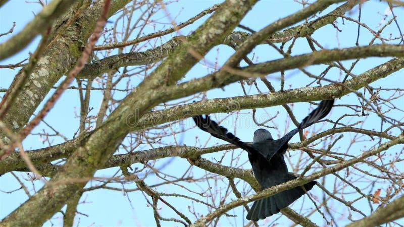 Pájaro que se sienta en ramas, Dinamarca imagen de archivo libre de regalías