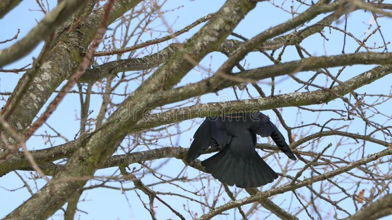 Pájaro que se sienta en ramas, Dinamarca foto de archivo