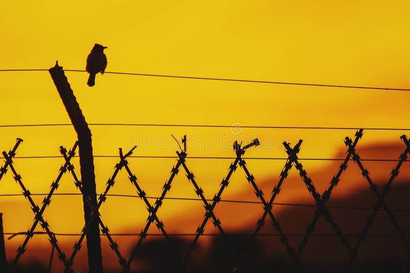 Pájaro que se sienta en un alambre con el silhoutte de la puesta del sol fotografía de archivo libre de regalías