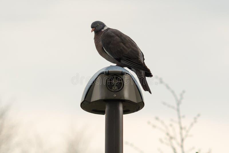 Pájaro que se sienta en una lámpara fotos de archivo