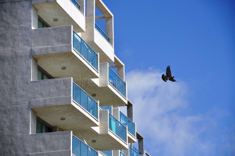 Pájaro que vuela cerca de los apartamentos fotografía de archivo libre de regalías