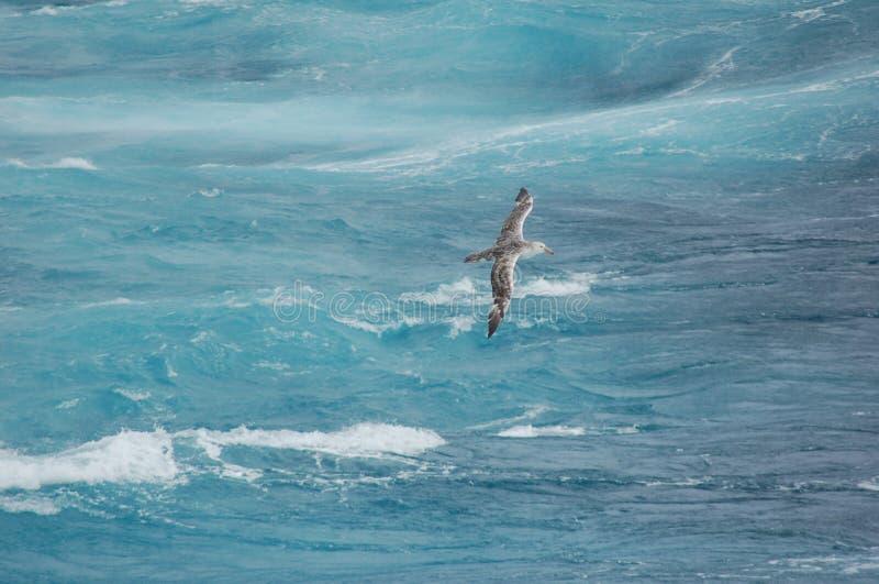 Pájaro que vuela ondas antedichas imagenes de archivo