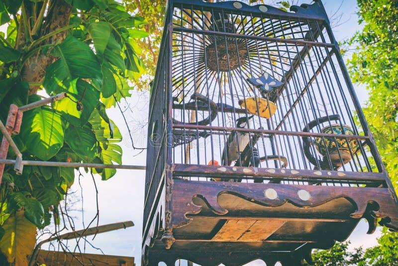 pájaro Rojo-patilludo del bulbul en una jaula de bambú fotos de archivo