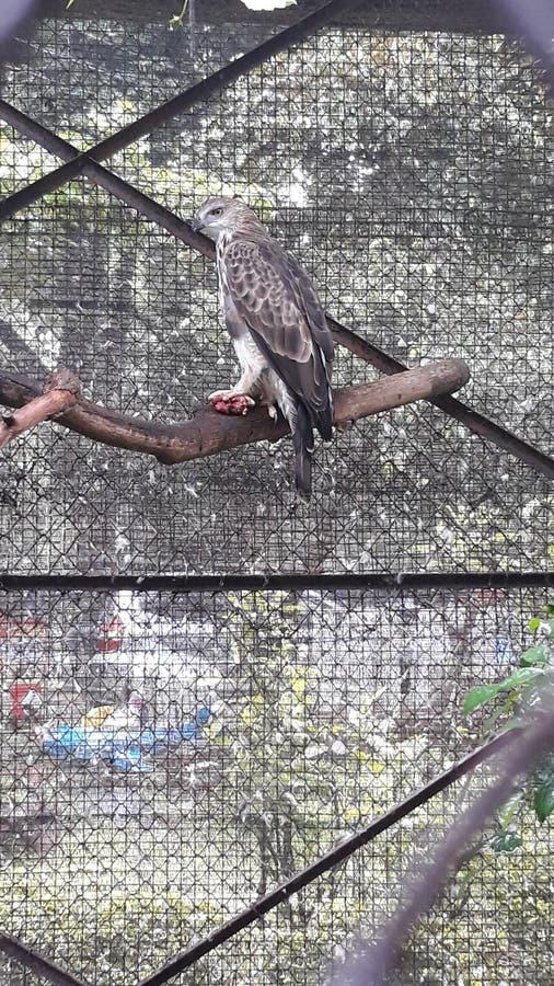 Pájaro salvaje en el parque zoológico fotografía de archivo