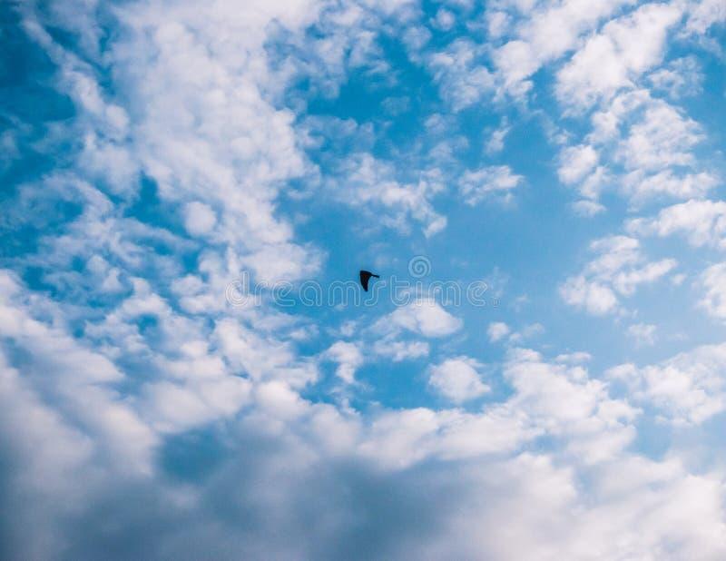 Pájaro a solas en los cielos azules imagen de archivo libre de regalías