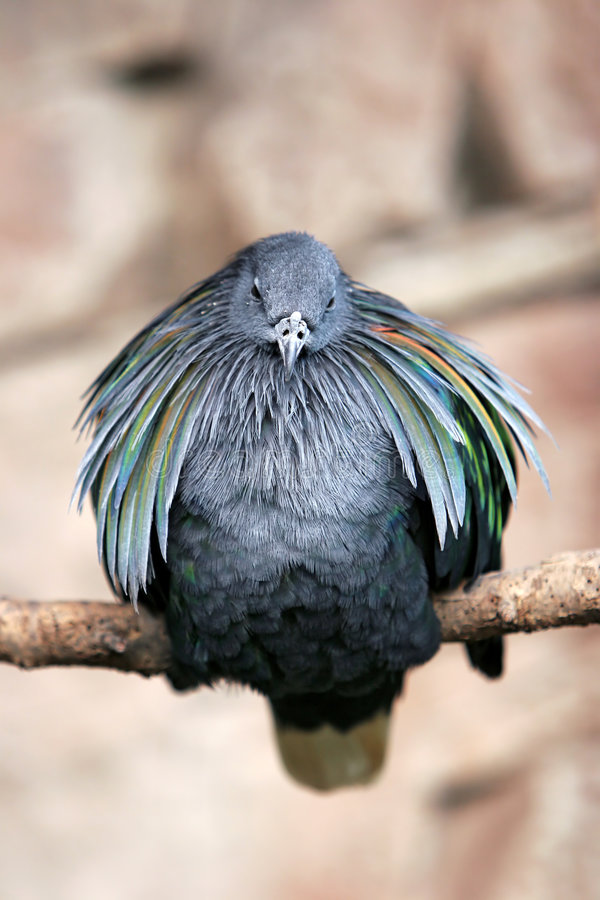 Pájaro soplado en perca foto de archivo libre de regalías