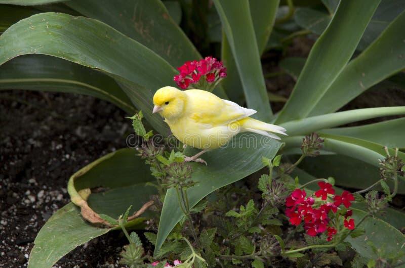 Pájaro subtropical del jardín foto de archivo