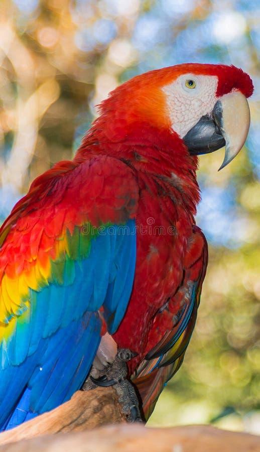 Pájaro tropical foto de archivo libre de regalías