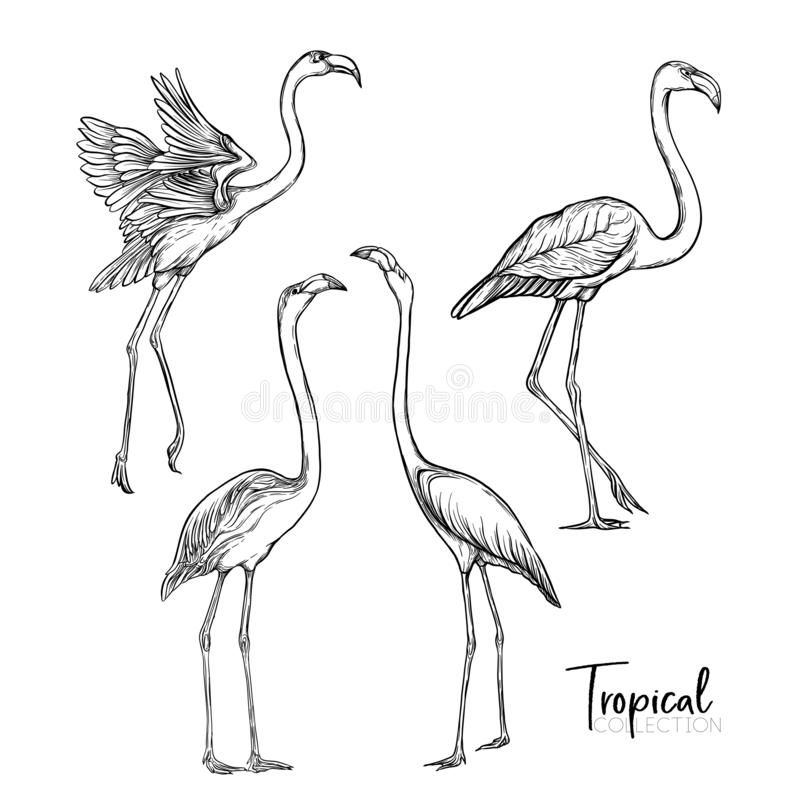 Pájaro tropical Ilustración del vector stock de ilustración