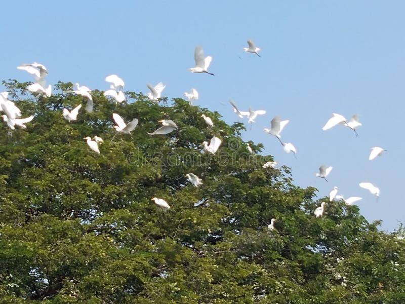 Pájaro verde sentado en el árbol Vuelo de garza blanca Ave Wader imagen de archivo
