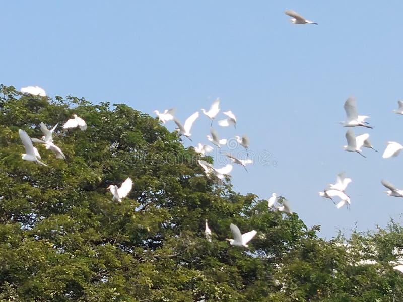Pájaro verde sentado en el árbol Vuelo de garza blanca Ave Wader fotografía de archivo libre de regalías