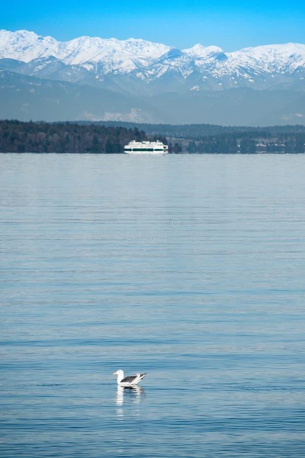 Pájaro y barco que flotan en Puget Sound foto de archivo