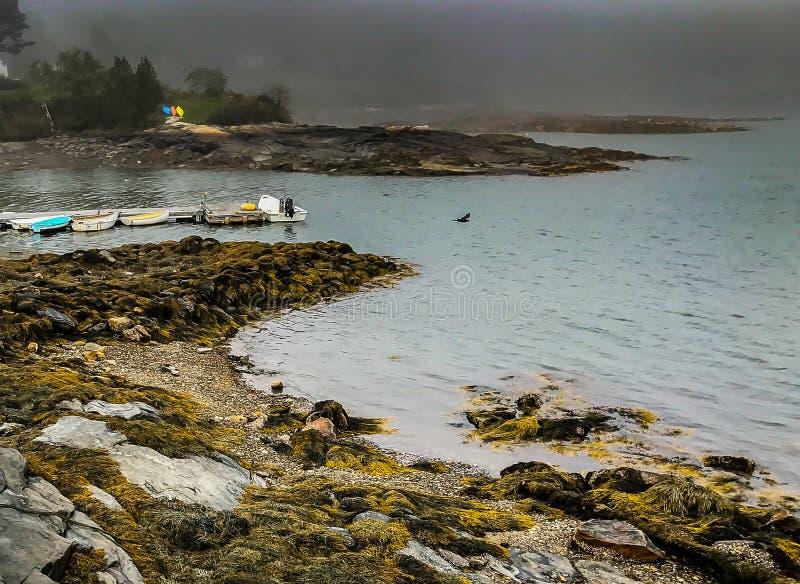 Pájaro y barcos en la costa de Maine imagenes de archivo