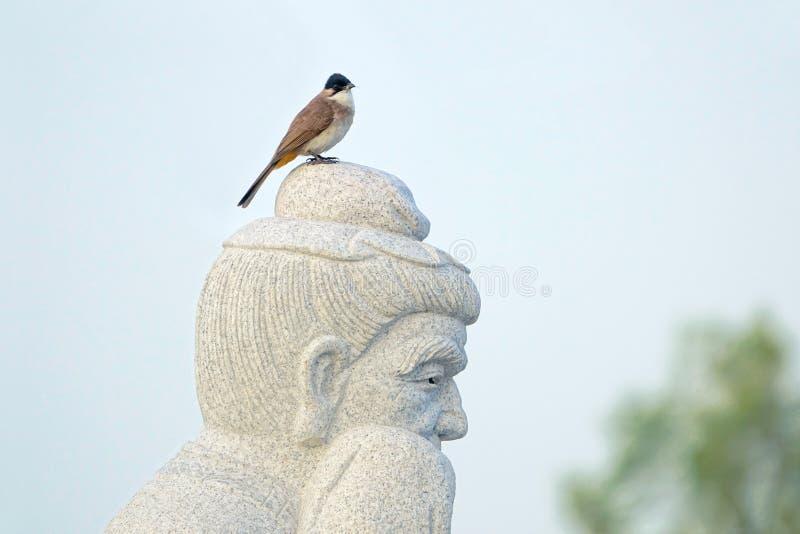 Pájaro y Buda foto de archivo