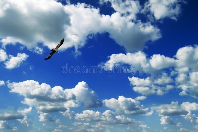 Pájaro y cielo imagen de archivo