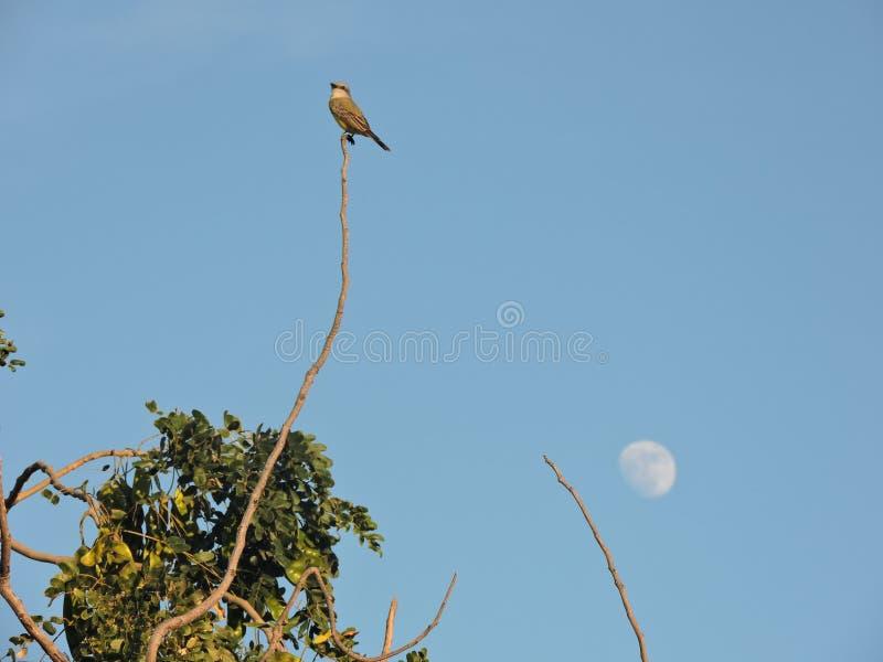 Pájaro y luna imagenes de archivo