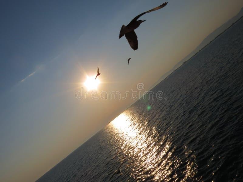 Pájaro y mar imagenes de archivo