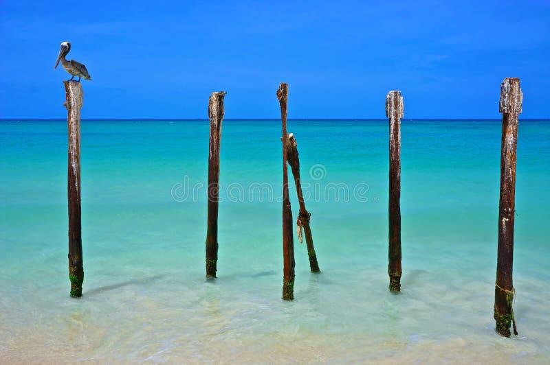 Pájaro y playa de Manchebo imágenes de archivo libres de regalías