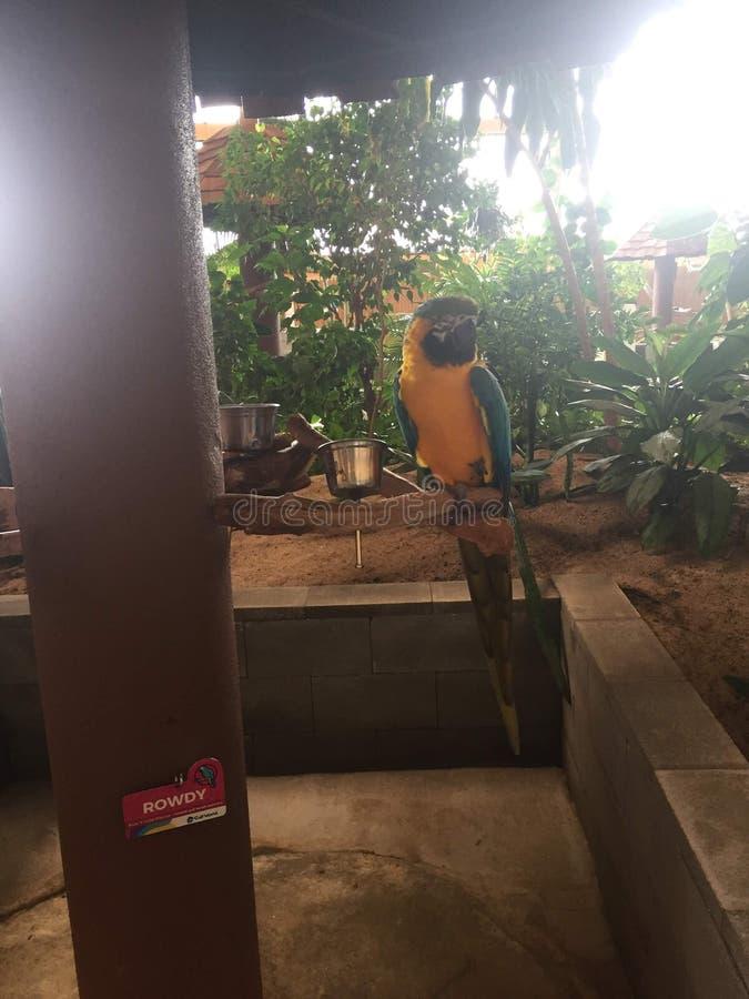 Pájaros cantantes coloridos encaramados en los palillos y ramas que comen como mirada turística encendido imagenes de archivo