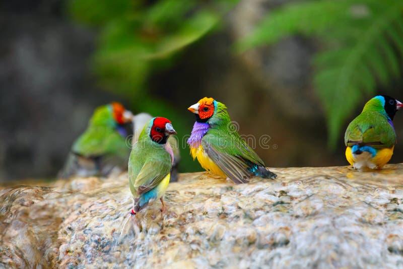 Pájaros exóticos que gozan del agua foto de archivo