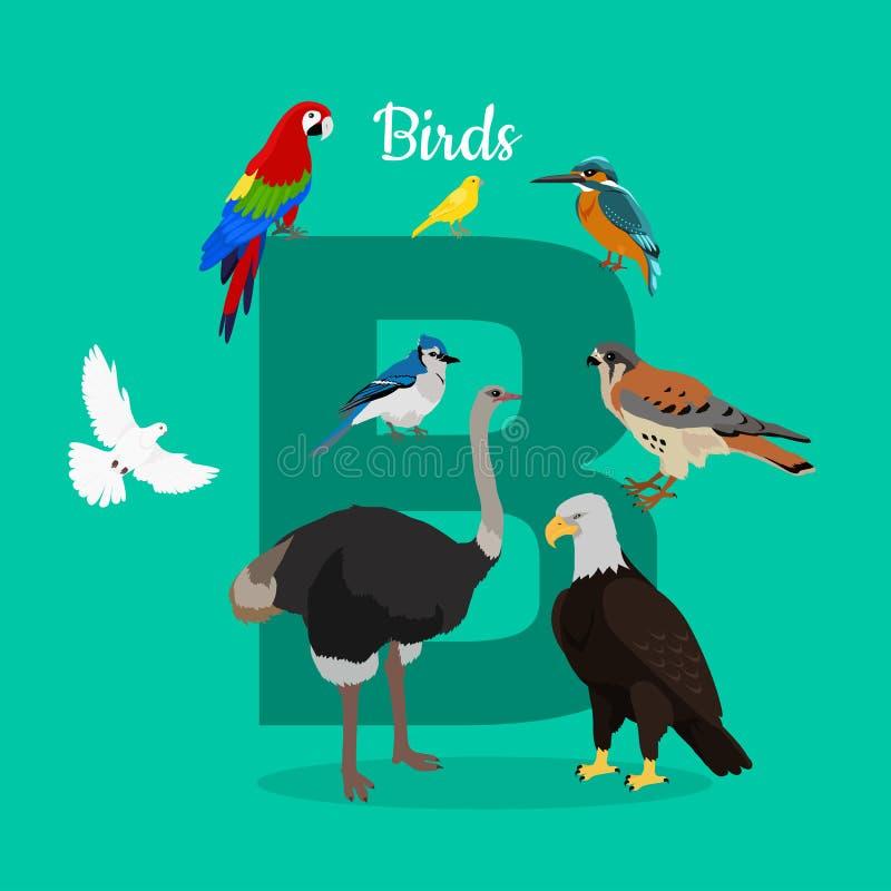 Pájaros con la letra B ABC, alfabeto ilustración del vector