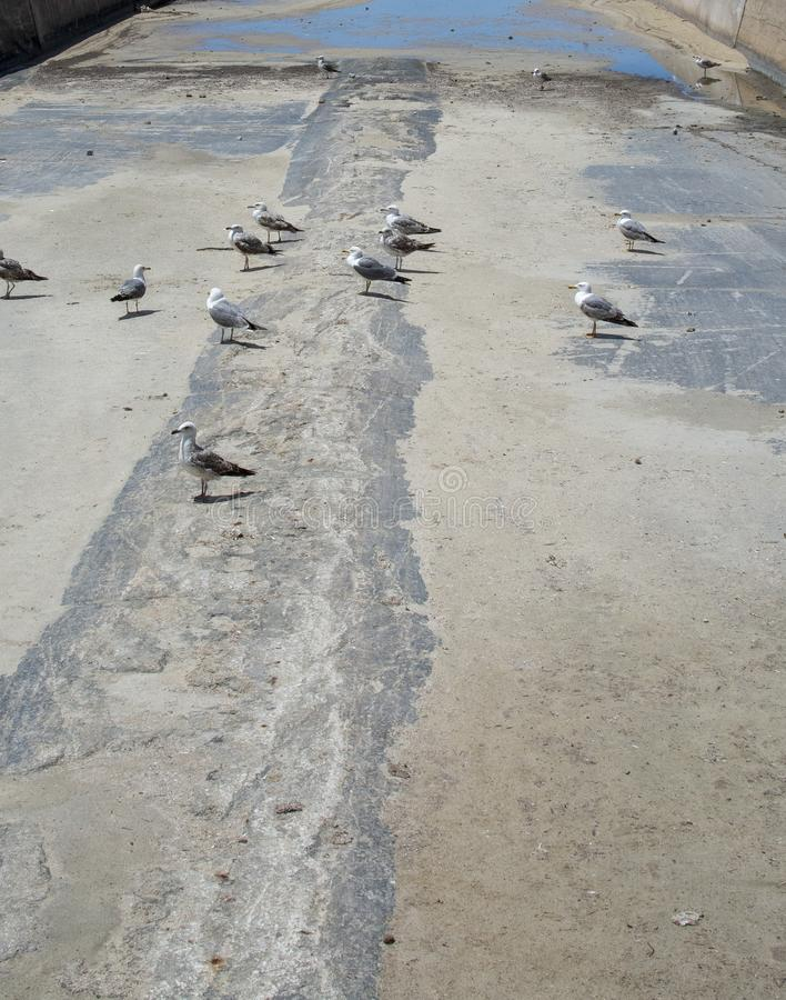Pájaros concretos secos del canal del drenaje foto de archivo
