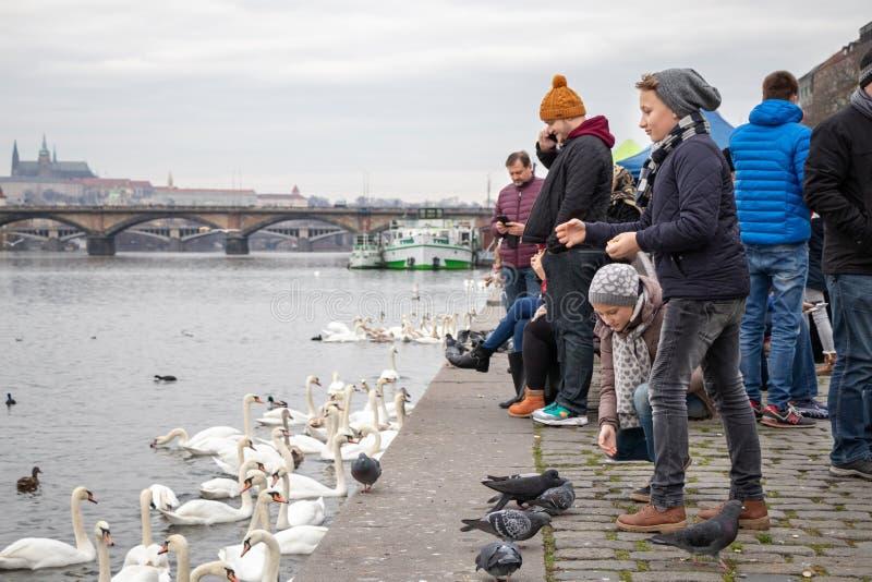 Pájaros de alimentación de la gente en el riverbank de Naplavka en Praga fotografía de archivo