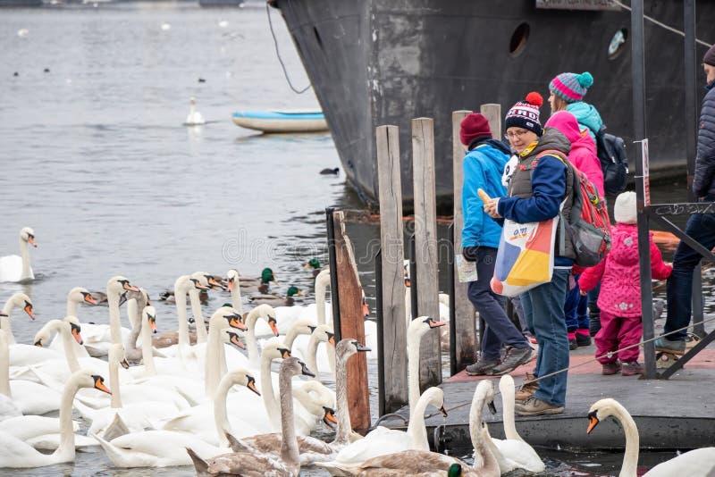 Pájaros de alimentación de la gente en el riverbank de Naplavka en Praga fotos de archivo