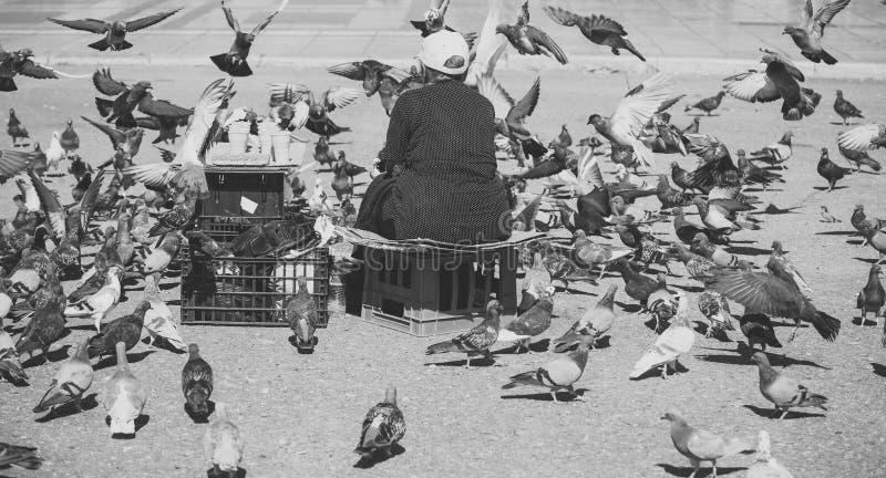 Pájaros de alimentación de la vieja mujer sola en el centro de la ciudad grande Introducir las palomas Palomas de alimentación de fotografía de archivo libre de regalías