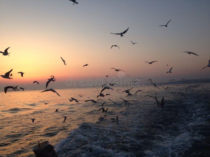 Pájaros de baile en el mar foto de archivo