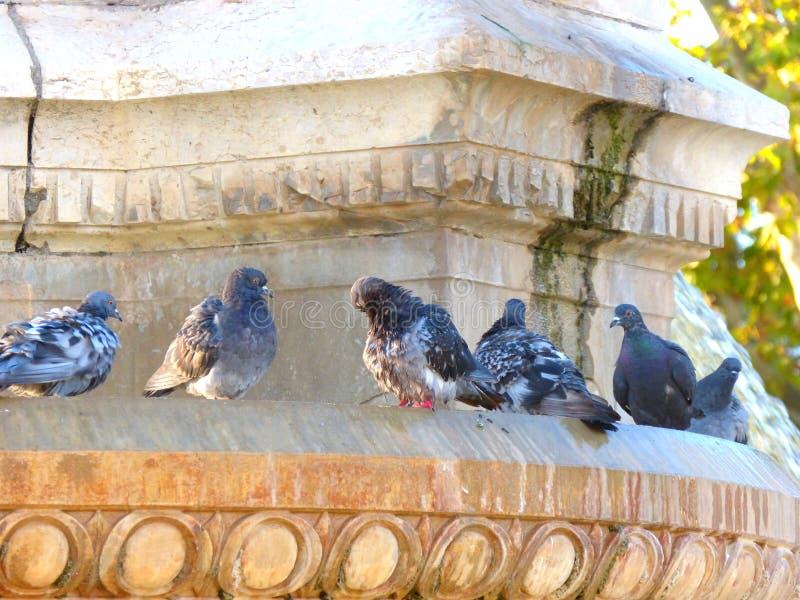 Pájaros de la fuente fotografía de archivo