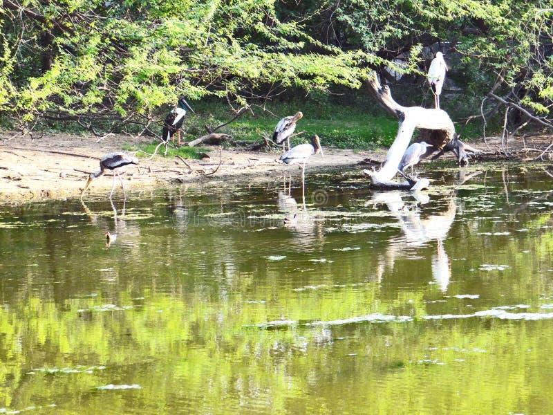 Pájaros de la garza imágenes de archivo libres de regalías
