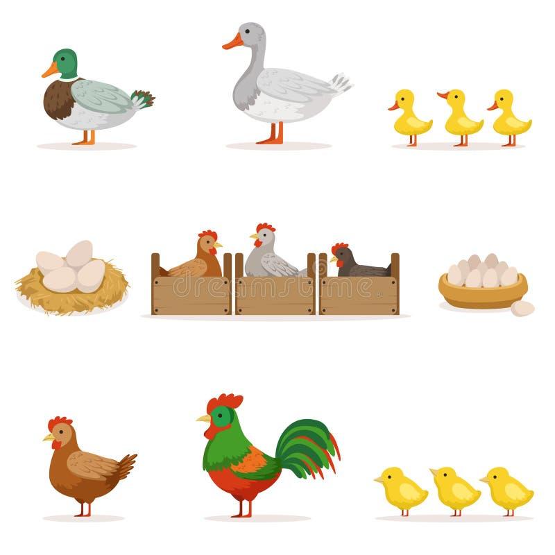 Pájaros de la granja crecidos para la carne y para poner los huevos, serie de la agricultura biológica de los ejemplos del vector stock de ilustración