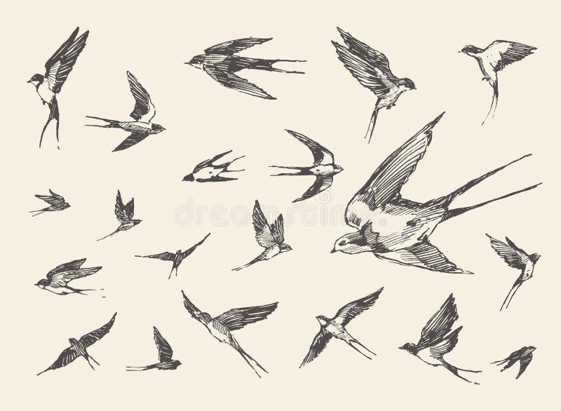 Pájaros de la multitud que vuelan bosquejo dibujado tragos del vector ilustración del vector