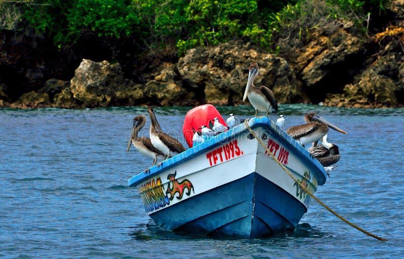 Pájaros de mar en Trinidad y Tobago fotos de archivo libres de regalías