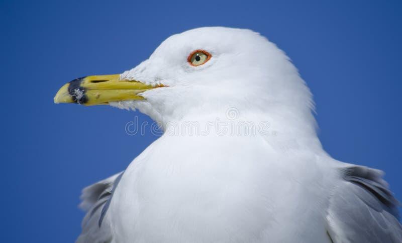 Pájaros de Myrtle Beach fotos de archivo