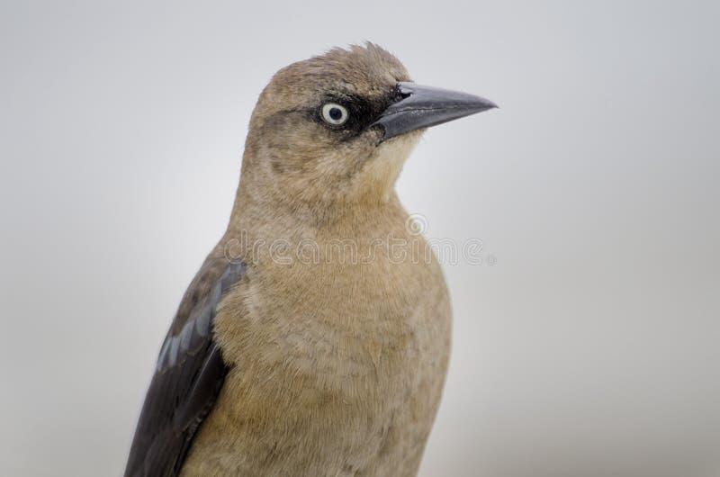 Pájaros de Myrtle Beach imagenes de archivo