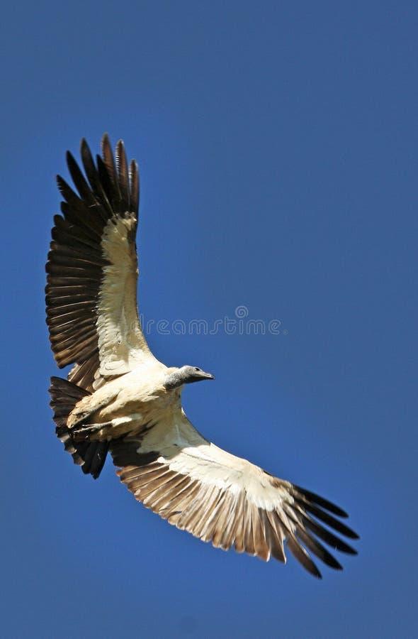 Pájaros de Tanzania fotos de archivo libres de regalías